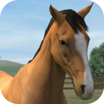 My Horse App